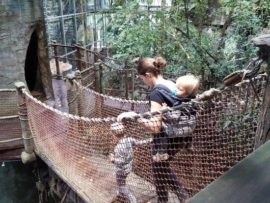 Universeum: swingbridge in the rainforest