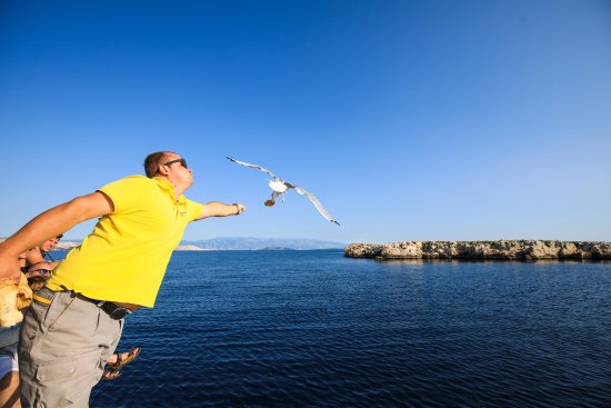 Punat, Croatia: Feed the seagulls with the bread offered on the boat!