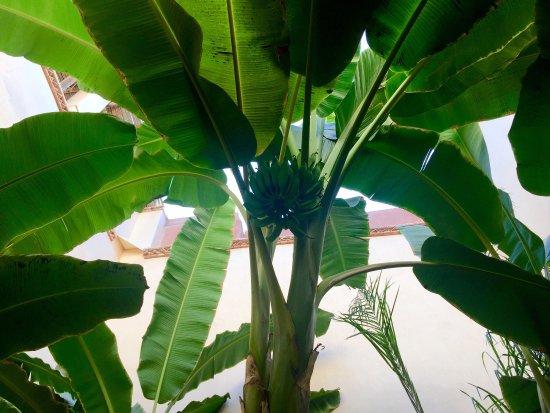 Riad les Inseparables: photo2.jpg