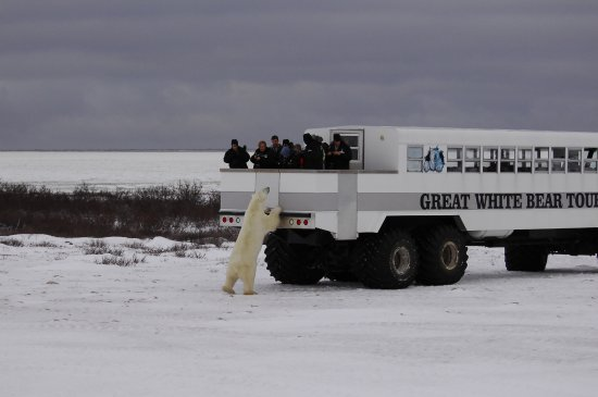 ‪Great White Bear Tours‬