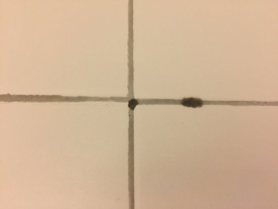 Valparaiso, IN: Close up of mold in shower on arrival