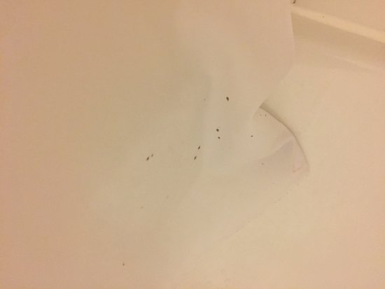 Valparaiso, IN: Mold on shower curtain on arrival