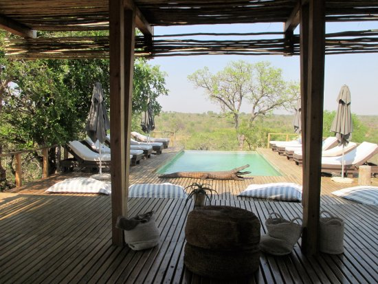 Simbavati River Lodge: poolside relaxation - not a real crocodile.