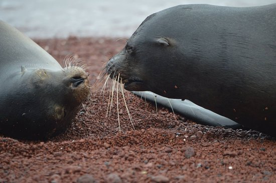 Metropolitan Touring: Sea Lions upclose in the Galapagos - just one of many species to see there.