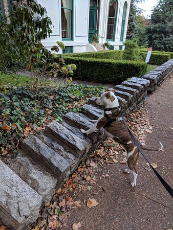 Saint Louis, Μιζούρι: my dog LOVES the houses in benton place