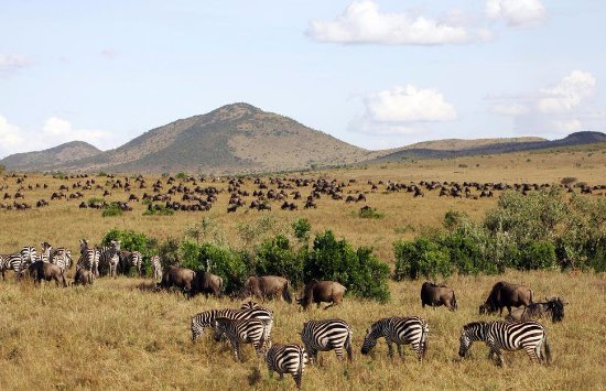 Tarangire National Park, Tanzanya: Wildbeest migration in Tanzania