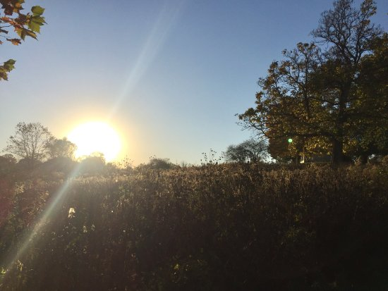 West Chester, PA: Beautiful sunset on a Fall day lends itself to a walk at Stroud Preserve with someone special.