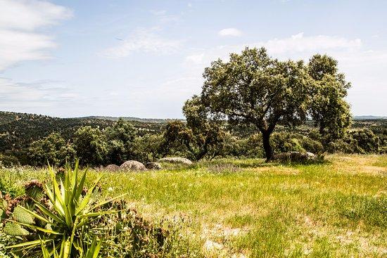 Arraiolos, Portugal: Vista da piscina para os campos da herdade
