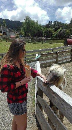 Warkworth, นิวซีแลนด์: Friendly little pony