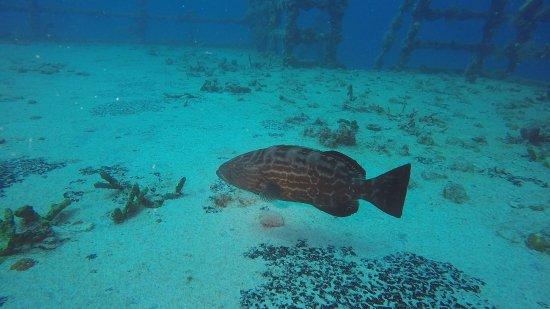 Florida Keys Dive Center: photo1.jpg