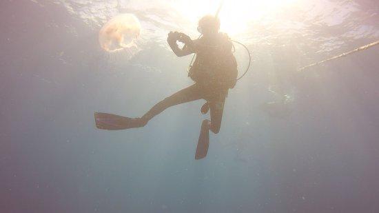 Florida Keys Dive Center: photo3.jpg