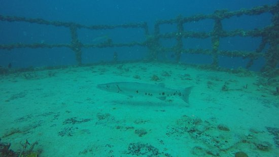 Florida Keys Dive Center: photo5.jpg