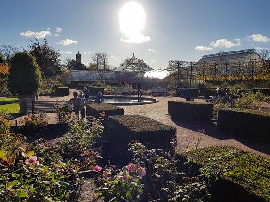 Horticultural Gardens (Tradgardsforeningen): 20171102_111056_large.jpg