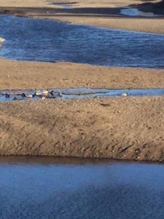 Prince George, Kanada: Sand bars of the Nechako River
