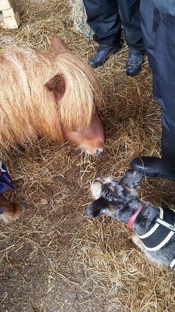 Penryn, UK: Lejla and the pony