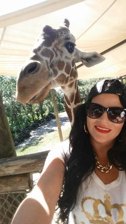 Brevard Zoo : Loved feeding and taking selfies with the giraffes!!!