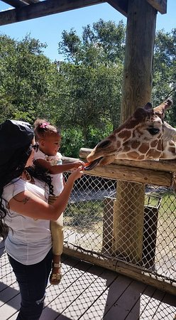 Brevard Zoo : My baby wasn't scared! Proud of her!