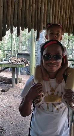 Brevard Zoo : Check out the background!!