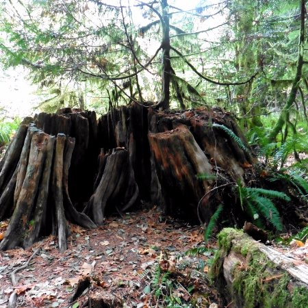Arbutus Grove Motel: Cathedral Grove