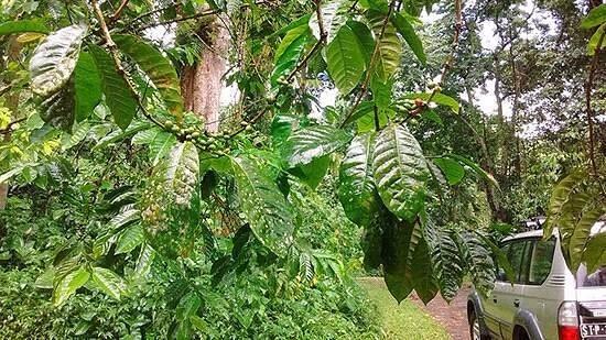 Sao Tome und Principe Bild