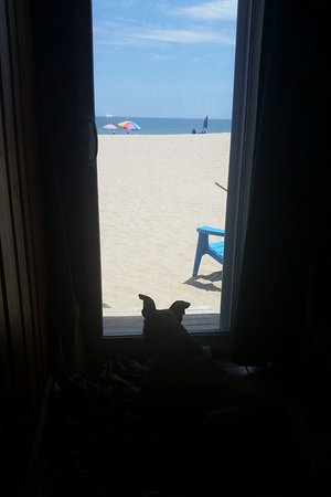 Dolphin Oceanfront Motel: Our dog observing the beach from the back door