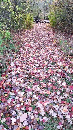 Modena, NY: Fall leaves blanketing a pathway