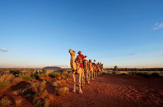 Tour Uluru Camel Express all'alba o