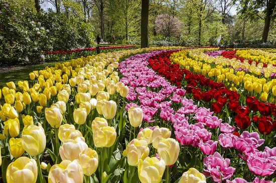 Keukenhof Garden Entrance Ticket with...