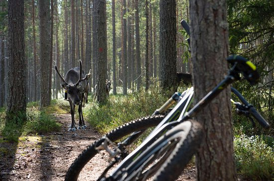 Rovaniemi Off-Road Bike aventura de...