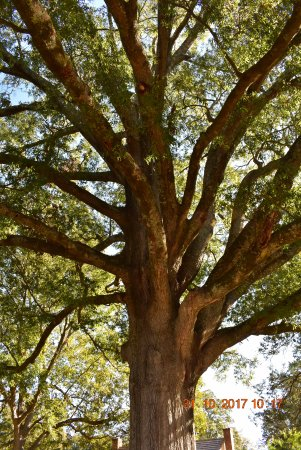 Crawfordville, GA: The park had many old and beautiful trees to photograph..