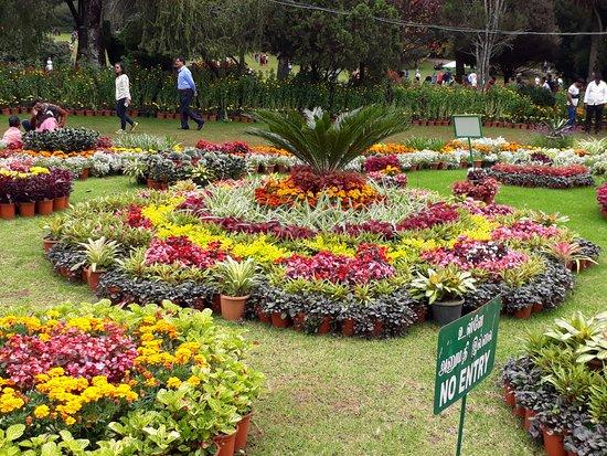 Beautiful Garden. Lots Of Different Type Of Flower, Plants
