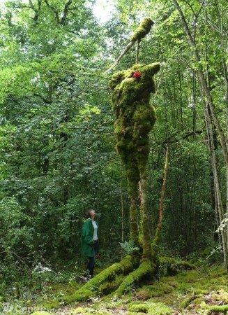 Foret des Geants Verts