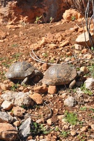 Leonidio, Greece: Hiking around and we saw these turtles.
