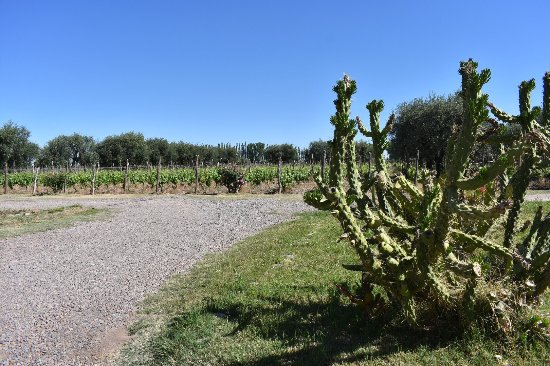 Photos from our visit in October to Carinae Vinedos & Bodega! Such a magical place!