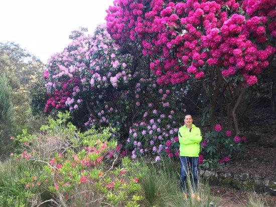 Tasmania, Australia: 塔斯曼尼亞