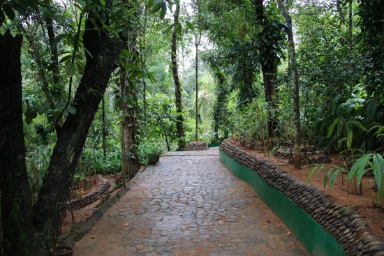 Sabaragamuwa Province, Sri Lanka: entry path of trees and shrubs