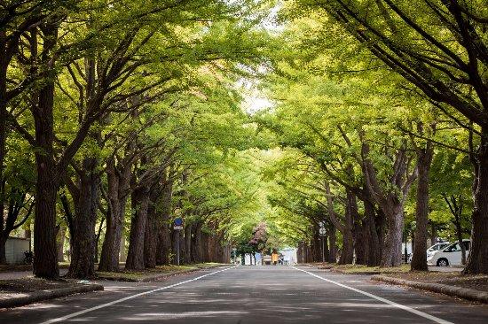 Hokkaido University Sapporo Campus
