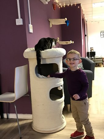 Feline Good Cat Cafe Reviews