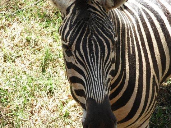 Johannesburg Zoo : DSCN0599_large.jpg