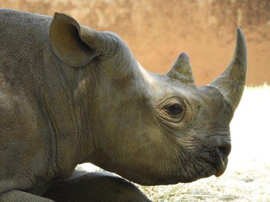 Johannesburg Zoo : DSCN0595_large.jpg