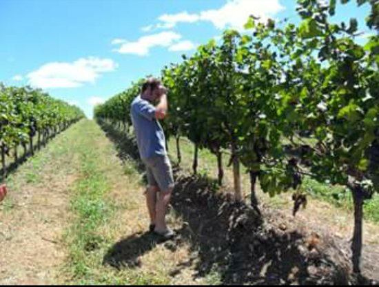 Casa Nova, BA: Miolo Wine Group: andando pelas parreiras