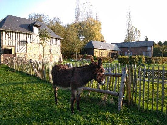 Bonneville-la-Louvet 사진