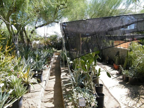 Moorten Botanical Garden Picture Of Moorten Botanical Garden Palm Springs Tripadvisor