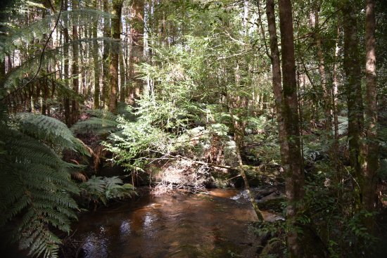Marysville, Australia: Cuymberland creek, on the Big Tree section of the walk
