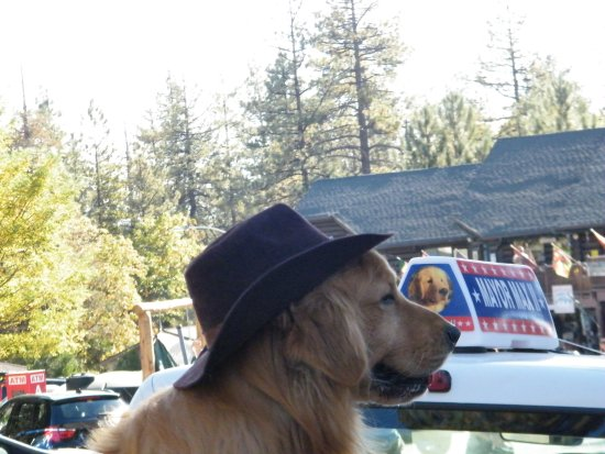Idyllwild, Californien: Mayor Max probably loves this place