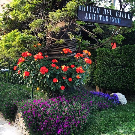 Sinio, Italy: Il giardino