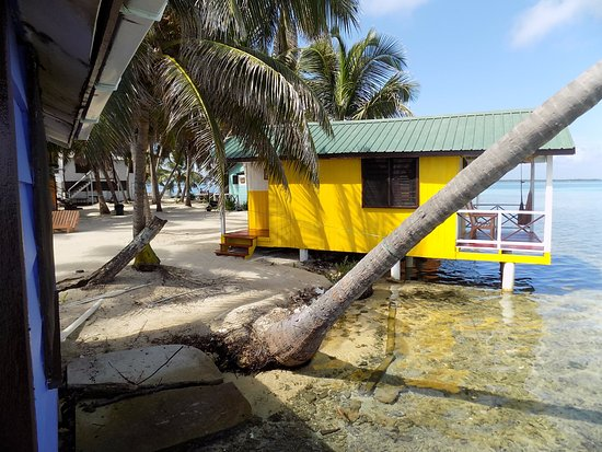 Tobacco Caye, Μπελίζ: Look out for fish friends