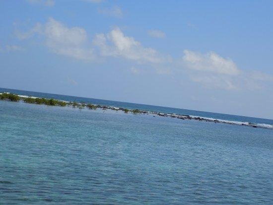 Tobacco Caye, Μπελίζ: View to the reef