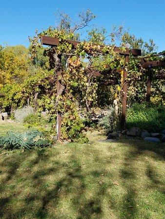 Cornville, Аризона: 20171028_141302_large.jpg