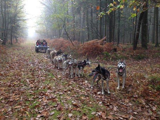 Saint-Symphorien, Fransa: Sled Dog Ride, Forêt de la Petite Charnie
